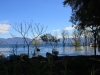 Bomen/ trees in water