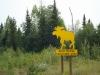 Elanden/ moose