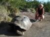 Landschildpad/ land turtoise