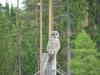 Uil/ owl