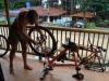 Fietsonderhoud/ bike maintenance