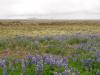 Eerste blik op IJsland/ first impression of Iceland
