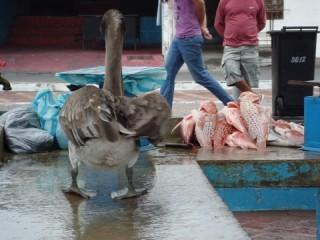 Visdief/ fish thief