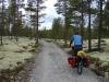 Door het bos/ through the forest
