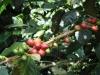 Koffie/ coffee