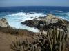 Cactus ontmoet zee/ cactus meets ocean