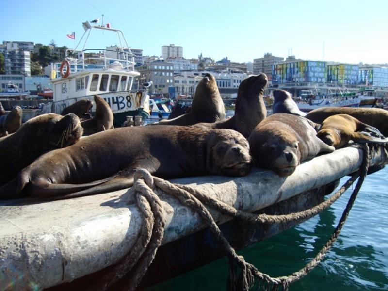 Meer zeehonden/ more seals