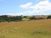 Schapen/ sheep
